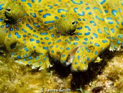 Peacock Flounder, Roatan, Olympus EM5, 60 mm macro, Sea a... by James Smith