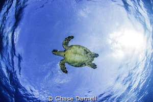 One of my favorite things to do is find turtles coming to... by Chase Darnell