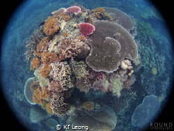 corals of Tioman Island by Kf Leong