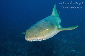 Nurse  shark coming by Alejandro Topete