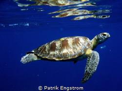 turtle Similan islands by Patrik Engstrom