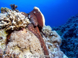 I'm starting to camouflage 
