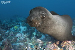 diving with seals is always great!!! by Gaetano Gargiulo