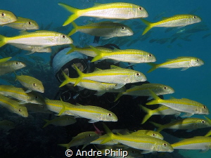 Look trough a fish curtain - a very close encounter with ... by Andre Philip