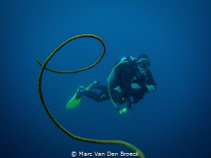 whip coraldiver by Marc Van Den Broeck