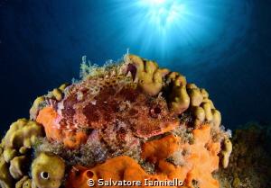 redfish by Salvatore Ianniello