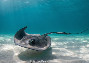 Curves. 