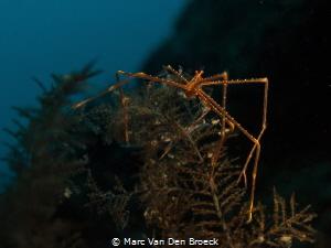 spider by Marc Van Den Broeck