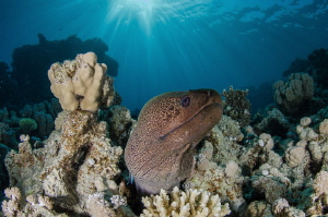 Moray eel under the sunrays by Dmitry Starostenkov