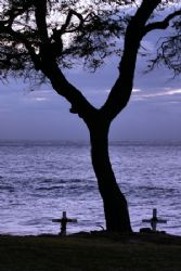 In memory of…? A common site you'll see around the Island... by Glenn Poulain
