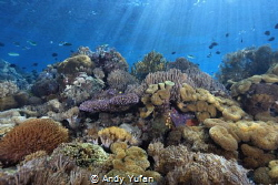 Pic taken at alor , east indonesia by Andy Yufan