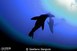 my strobe malfunctioned at 20m... so I had to improvise... by Gaetano Gargiulo