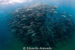 Cabo Pulmo by Eduardo Acevedo