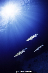 """""""Silver Sun Tan""""  North Wall, Grand Cayman by Chase Darnell"""
