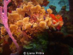 Santa Rosa Wall Beauty by Liana Pribla