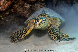 """itchy back NIKON D7000 in a Seacam """"Prelude"""" uw housing,... by Thomas Bannenberg"""
