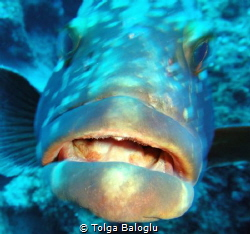 This grouper has something to say by Tolga Baloglu