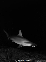 Cloaked in darkness, a curious hammerhead shark comes in ... by Byron Dilkes