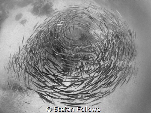 """""""A fish may love a bird, but where would they live?"""" Drew... by Stefan Follows"""