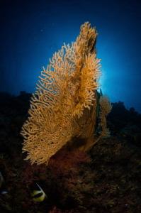 Glowing gorgonaria by Dmitry Starostenkov