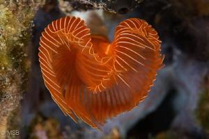 The Heart. by Mehmet Salih Bilal