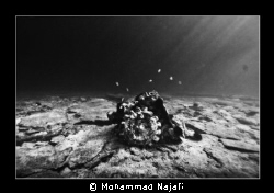 A gear like peace of the Greek ship wrecked in sea water. by Mohammad Najafi
