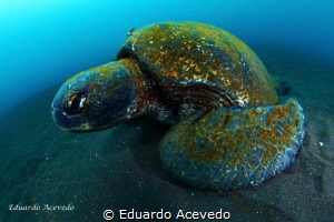 Galapagos Islands by Eduardo Acevedo