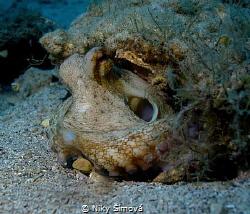 Night dive - octopus by Niky Šímová