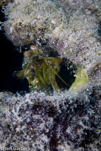 Mantis in a bottle - Islamorada by Jim Garber
