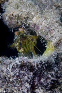 Mantis in a bottle - Islamorada by Jim Garber