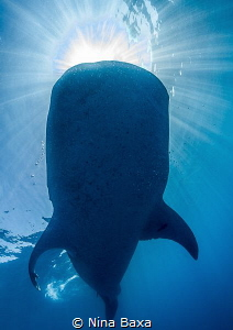 Drinking the Sun. Taken while free-diving off Isla Mujer... by Nina Baxa
