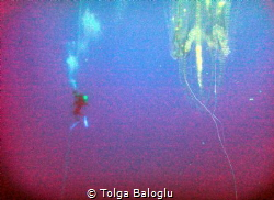 The diver is not alone.. by Tolga Baloglu