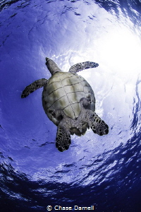 It's always a good feeling to sea any kind of Sea Turtle ... by Chase Darnell