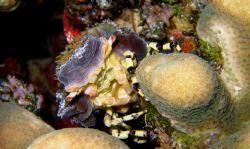 Night Dive at Wakatobi 2005 by Beate Krebs