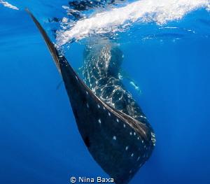 ~Swish~ Taken while free-diving off Isla Mujeres, Mexico.... by Nina Baxa