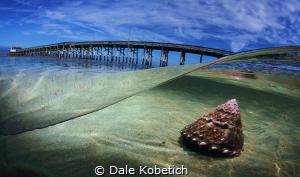 turban snail newport morning by Dale Kobetich
