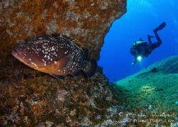 """Dusky Grouper on """"El Bajón"""", known as one of Jacques Cous... by Alexia Dunand"""