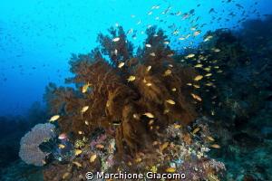 Raja Ampat reef Nikon D800E, 10,5 mm Nikon , two strobo... by Marchione Giacomo