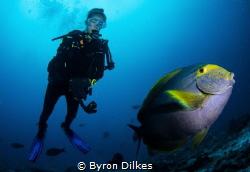 A diver looks on as a curious surgeon fish examines my ca... by Byron Dilkes