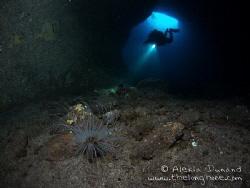 Anemone in Cueva del Diablo, El Hierro. by Alexia Dunand