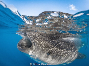 Breakfast Invite ~ Whale Shark breakfast – 'egg soup' – b... by Nina Baxa