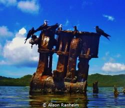 Sunken ship off the coast of Roatan Island! by Alison Ranheim