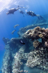 Mala Pier, Maui, HI - Divers swimming with green sea turt... by Jeff Ma