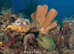 Lazy eel taking in the day by Lisa Kelly