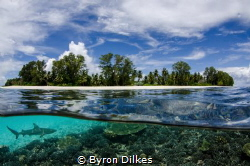 A blac-ktip reef shark patrols the shallow reef flat of a... by Byron Dilkes