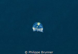 While we waiting for see humpback whale of 12mts, this sm... by Philippe Brunner