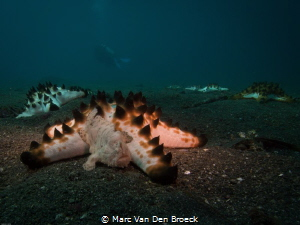 lembeh sight by Marc Van Den Broeck
