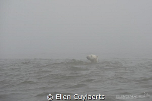 Polar Bear in the Mist, Hudson Bay by Ellen Cuylaerts