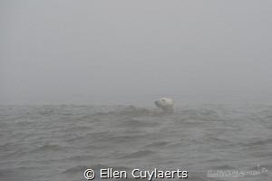 Polar Bear in the Mist, Hudson Bay by Ellen Cuylaerts