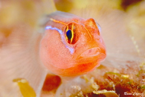 Red tiny face to face by Raoul Caprez